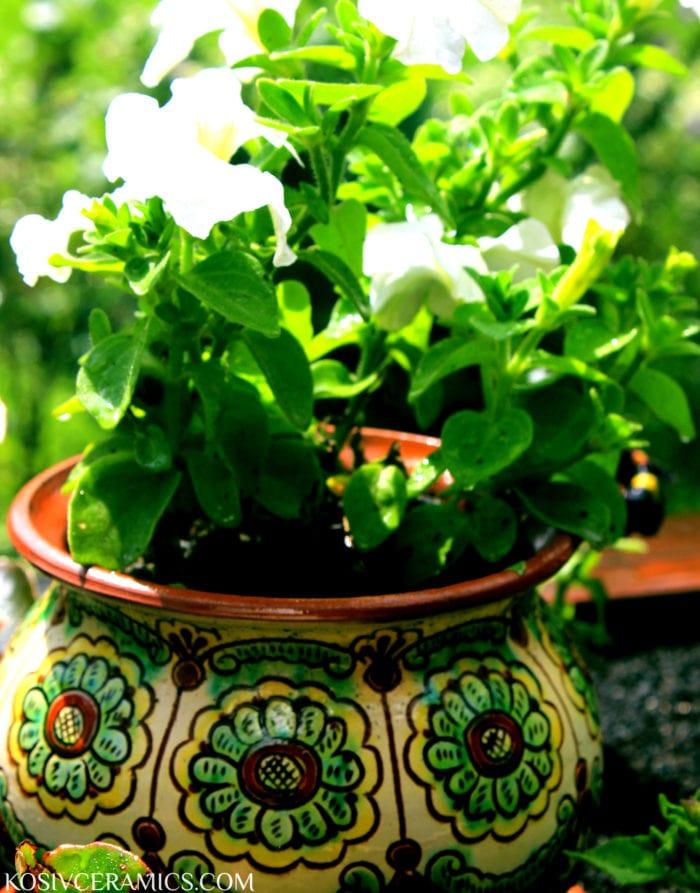 Про кактуси та ідеї